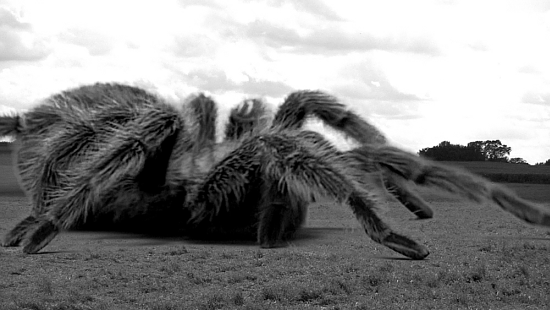 The Giant Spider!
